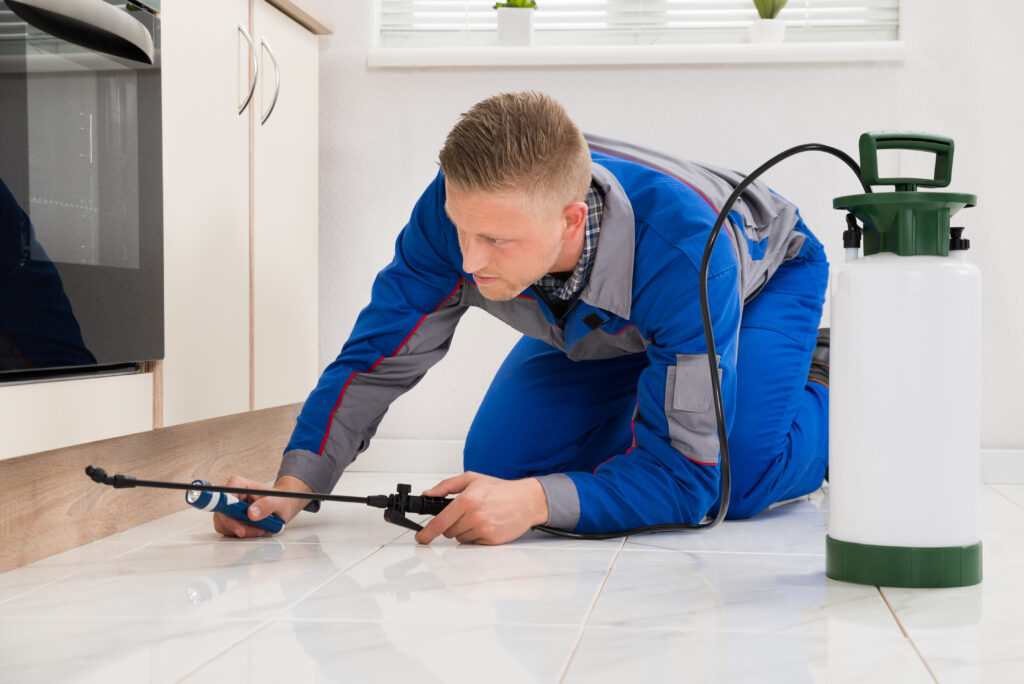 Easy Ways to Stop Future Bug Infestation in Your Home