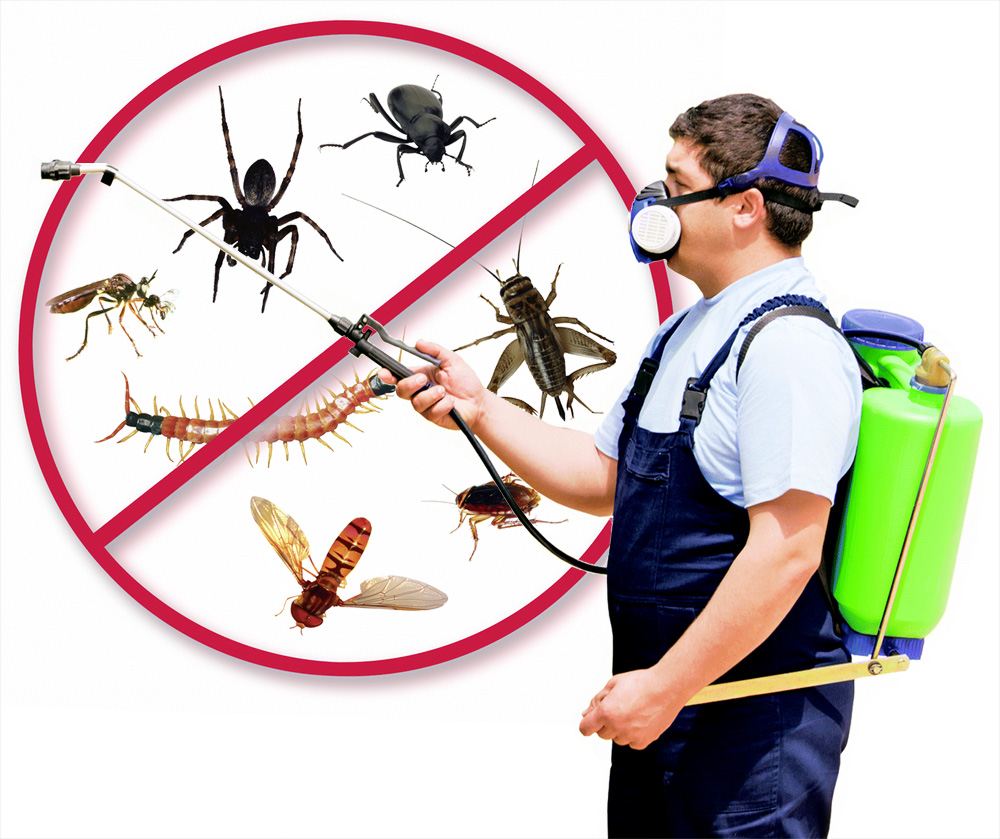Why You Should Hire Professionals For Termite Control Central Coast